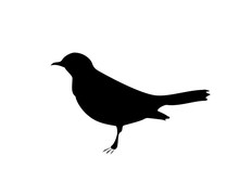 Blackbird Black Silhouette On ...