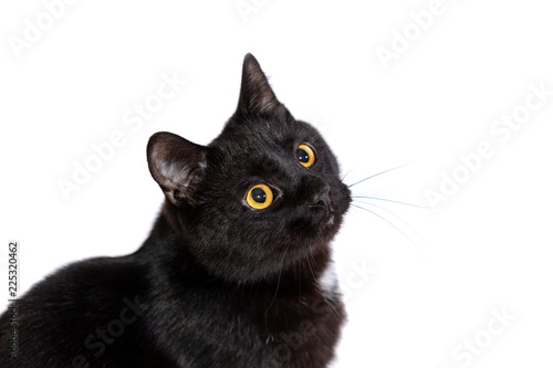 Tablou Canvas Adorable black cat isolated on white background