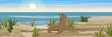 A Large Fur Seal On A Stony Coast Of The Sea Or Ocean With Shards Of Rocks And Thickets Of Grass. Seascape. Vector Landscapes. Wild Nature