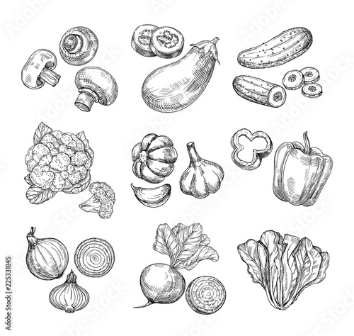 Fototapeta Hand drawn vegetables. Garden cauliflower, pepper and eggplant, champignons. Fresh vegan products. Sketch vegetable vector isolated set. Illustration of champignon and cucumber, cabbage and mushroom obraz