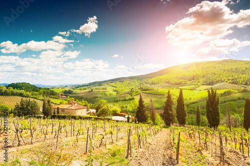 Deurstickers Toscane Vineyards in Tuscany, Italy. Beautiful summer landscape
