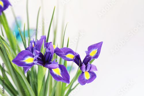 Deurstickers Iris Purple irises on a white background