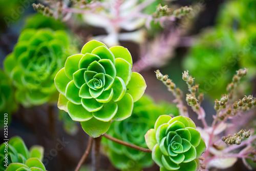 Foto op Plexiglas Bloemen Flowers for your design