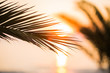 Tropical palm leaves at sunset background, Summer background