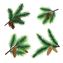 Fir Branch. Christmas Tree Branches With Cones. Pine Xmas Vector Decoration. Illustration Of Fir-cone Decor, Fir-tree Needle