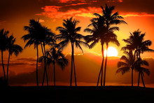 Tropical Palm Trees Silhouette...