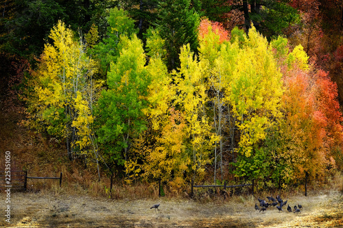 Mountains Fall Colors and Wild Turkeys Golden Red Leaves Wild Fowl