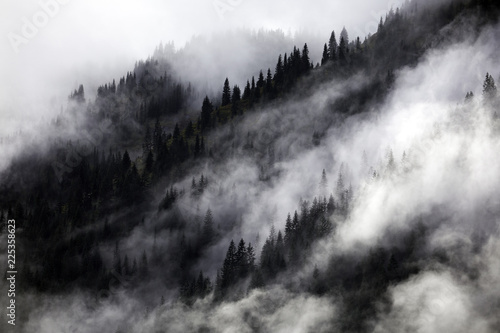 Spoed Foto op Canvas Grijs Fog in the forest, North Cascades National Park, WA, USA.