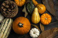 Fall Grouping Of Squash Gourd Pumpkins Leaves And Pinecone Rustic