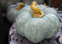 Decorative Halloween Or Thanksgiving Teal Pumpkin With Twisted Stem Sitting On A Table With Shiny Bat Tablecloth And Other Similar Pumpkins Blurred In Background