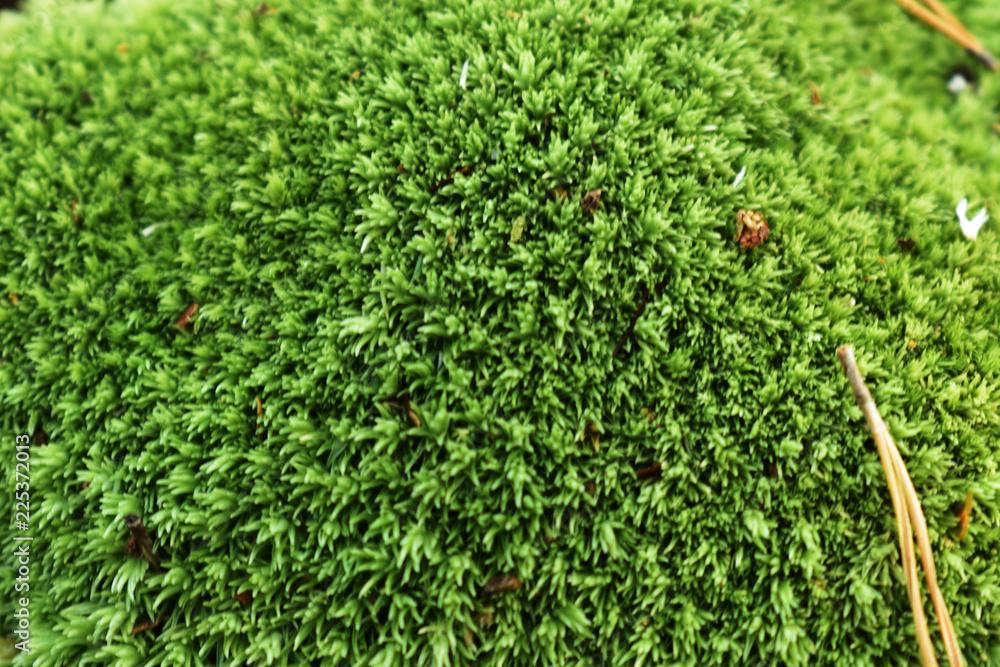 Fototapeta piękny zielony mech
