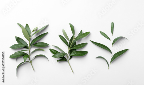 Fotomural Twigs with fresh green olive leaves on white background, top view