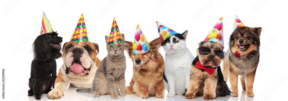 Fototapety, obrazy: group of seven adorable cats and dogs on birthday party