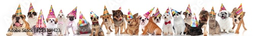 happy and adorable party pets with birthday hats