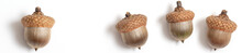 Header Acorns Of An Oak On A W...