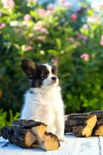 A Beautiful Puppy Sits