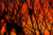 Intense Red Sunset