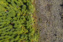Aerial Drone View Of Deforesta...