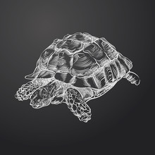 Hand Drawn Turtle Sketch Symbol Isolated On Chalkboard. Vector Amphibian And Reptiles Element In Trendy Style