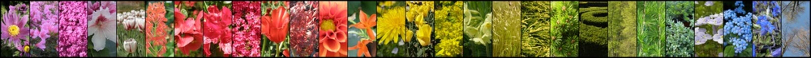 Tęcza z kwiatów