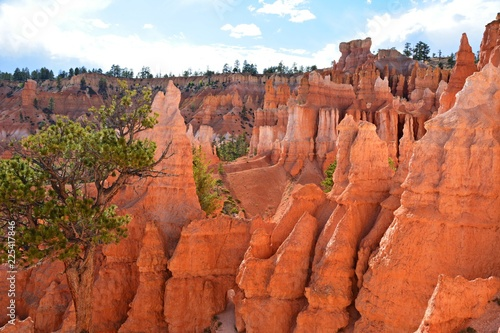 Foto op Canvas Baksteen bryce canyon national park