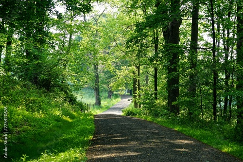 Photo Mount Pleasant, New York, USA: A shady carriage trail winds through dense forest on a bright summer day in the Rockefeller State Park Preserve