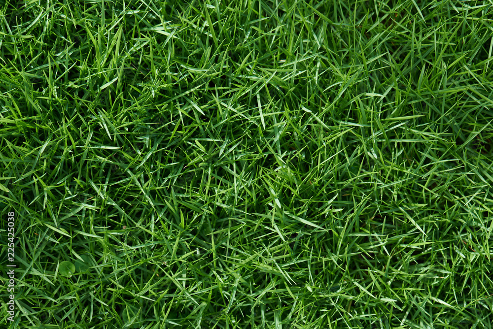 Fototapety, obrazy: Clean green grass