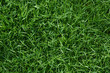 Clean green grass