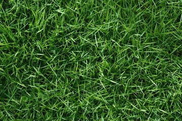 Čista zelena trava