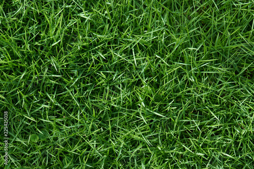 Poster Gras Clean green grass
