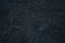 Top View Photo. Ground Texture With Coniferous Needles For Background. Dark Ground
