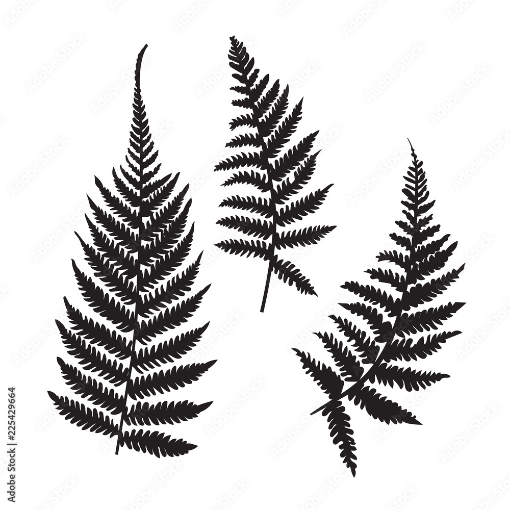 Fototapeta Vector fern silhouette collection. Black isolated prints of fern leaves on the white background.
