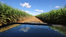A Game Drive Vehicle Heads Up A Sugar Cane Field In The Summer Season At Zimanag Private Game Reserve In The KwaZulu Natal Area Of South? Africa