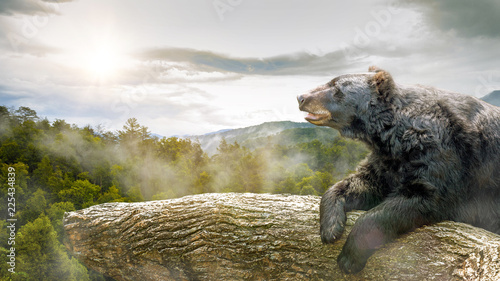 Bear in Tree at Smoky Mountains Park