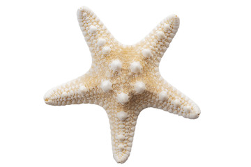 Marine life and sea creatures concept with a starfish isolated on white background with a clip path cutout