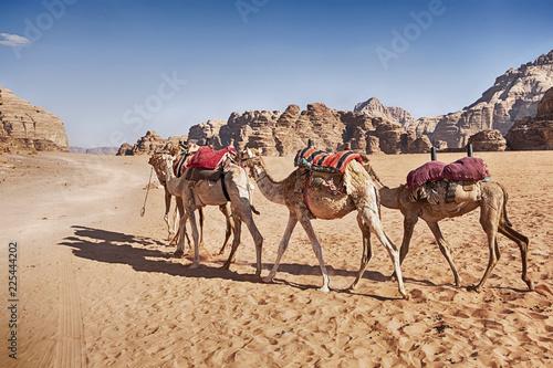 Fotografie, Obraz  Three Camel Caravan