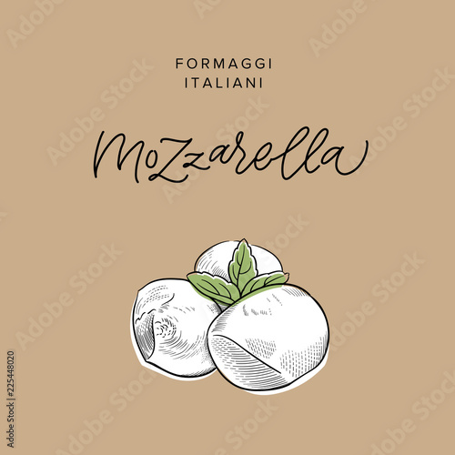 Fototapeta traditional Italian baby mozzarella cheese vintage engraving illustration with its name calligraphy on craft paper background obraz