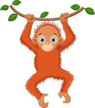 Cute Orangutan Cartoon Hanging...