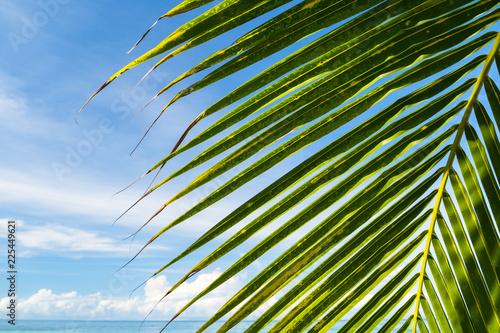 Beautiful coconut palm tree under blue sky on tropical beach and sea