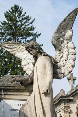 Fotobehang Begraafplaats One white stone angel on the french cemetery in the summer day