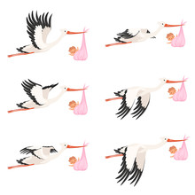 Flying Stork Frame Animation. ...