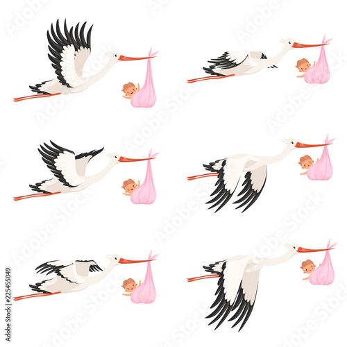 Fotografie, Obraz Flying stork frame animation