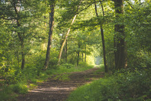 Path In Forest. Sun Coming Thr...