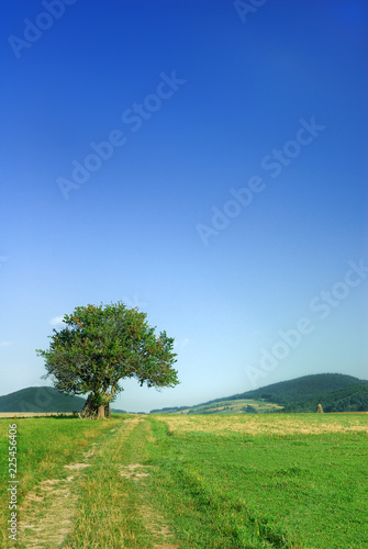 Idyllic landscape, lonely tree among green fields