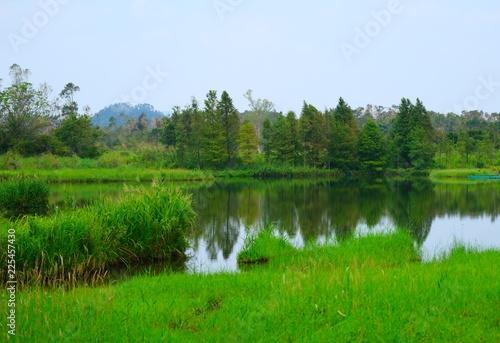 Fototapeta Beautiful nature lake landscape view with reflection of fresh green tree in Hong Kong obraz na płótnie