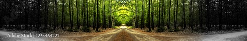 Garden Poster Road in forest Path through the middle of the forest. Great panoramic landscape