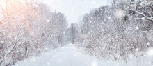 Trees Covered With Snow In The Forest On Frosty Morning. Beautiful Winter Panorama At Snowfall