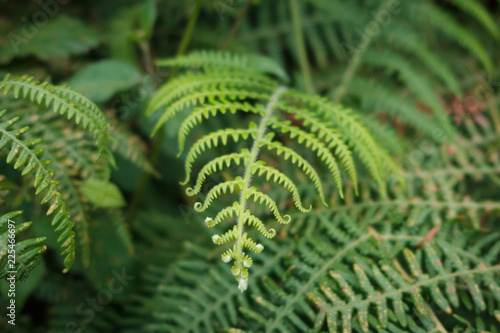 fern leaf closeup, fern plant macro nature background -