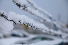 Barbed Wire Fence On Winter Ti...