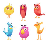 Fototapeta Fototapety na ścianę do pokoju dziecięcego - Angry cartoon birds. Chicken eagles canary animal faces and feathers vector game characters of colored birds. Illustration of color bird animal
